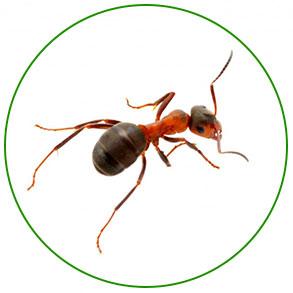 Против муравьёв