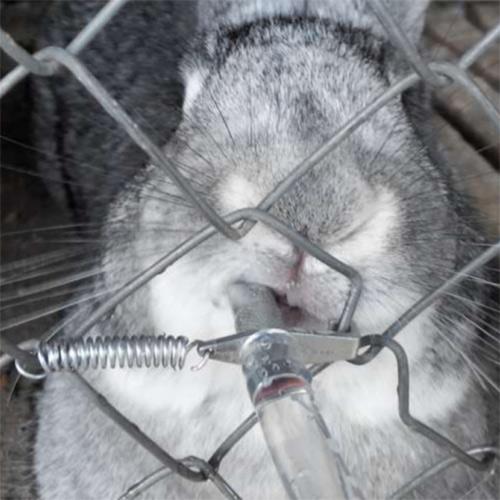 Фиксируем поилку на клетке с помощью пружинки