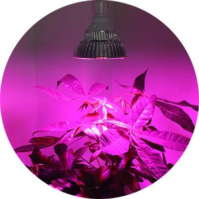 Растение под лампой